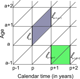 Figure 2. Calculating lifeyears in a Lexis parallelogram (blue selection) or a Lexis square (green selection). In the parallelogram, this could be done by taking the average of the number of persons alive at age 'a' and calendar year 'p' and the number of persons alive at age 'a+1' and year 'p+1' (if there is not much migration and mortality, if it occurs, does so on average in the middle of the year, this can be a very accurate measurement). In the Lexis square, the average is taken between the number of persons alive in the age category at the beginning of the year and the number at alive at the start of the next year.