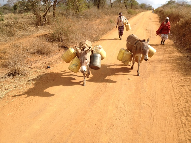 Women in the study communities often fetch and ferry water on donkeys